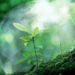 Шлях до еко-френдлі 5 звичок, які покращать наше життя